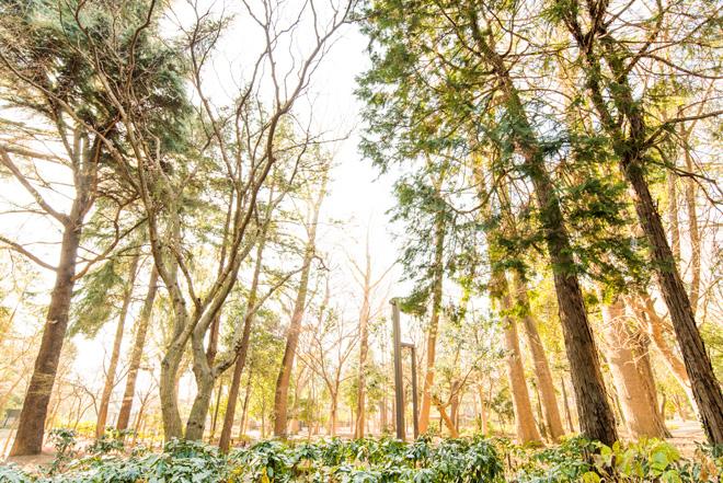 都会のオアシスのような林試の森公園。犬の散歩や小さなお子さんも楽しめる豊かな緑が広がってます。
