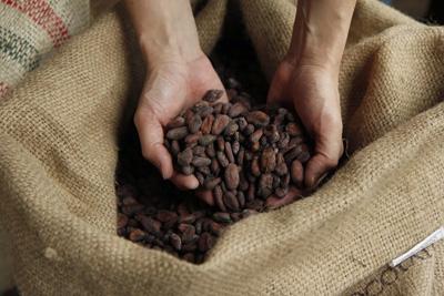 世界中から厳選したカカオ豆を仕入れている。