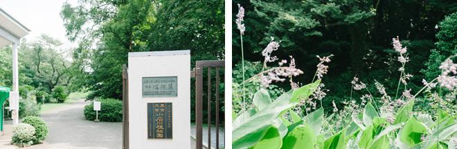 都心とは思えないほど緑いっぱいの景色が広がる小石川植物園。約16,000㎡の敷地には約4,000種類の植物が栽培されている。温室には珍しい亜熱帯の野生植物も
