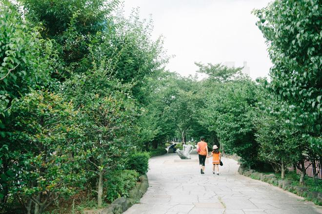 季節ごとに表情を変える播磨坂の並木道。春は桜並木に変わる