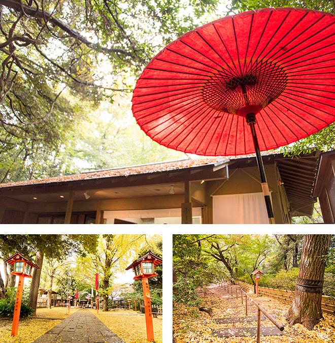 東京都指定の名勝、等々力渓谷。川のせせらぎと澄んだ空気は、まさに都会のオアシス。 等々力不動尊ではイチョウの黄金の絨毯が一面に広がります。
