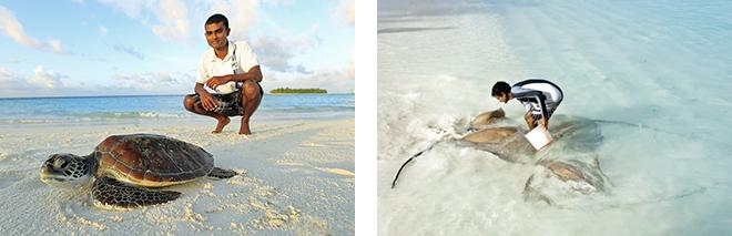 海と共にあるリゾートだからこそ、環境保全はバンヤンツリーの哲学のひとつ。ウミガメ(左)やアカエイ(右)など、海洋生物の保護を学習する機会も子どもたちに提供されている。