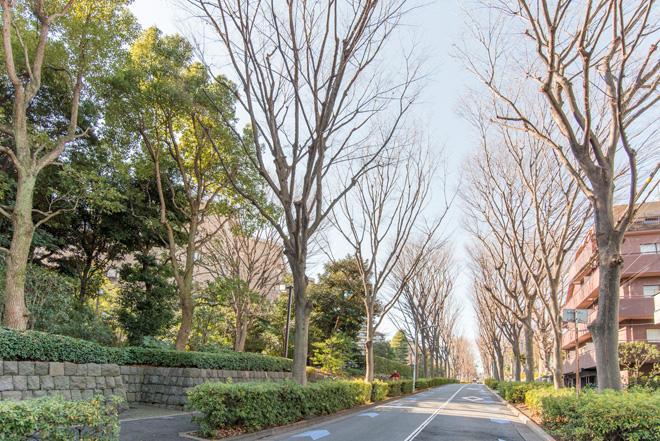 広尾の日赤医療センターに向かう堀田坂。自然が残り都会の喧騒を忘れさせてくれます。