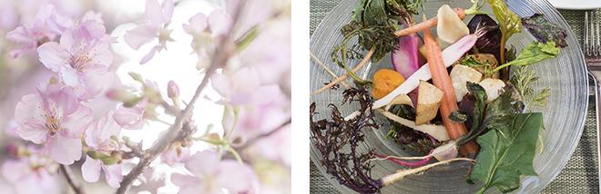 満開の桜とスペシャル料理とのコラボ。