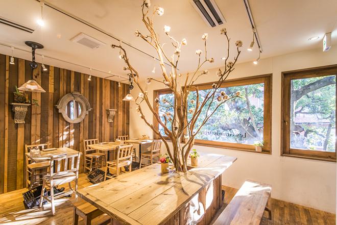 無垢の木のぬくもりに包まれる2階の窓からは、木の枝の迫力。