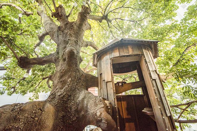 トムソーヤー気分満点、立派な木の幹の上に建つ小屋。レ・グラン・ザルブルはフランス語で「大きな木」という意味。