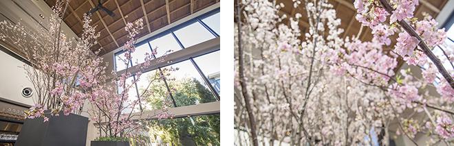 フラワーアーティスト・赤井勝氏による桜の装飾は、河津桜と啓翁桜の2種の桜をアレンジ。