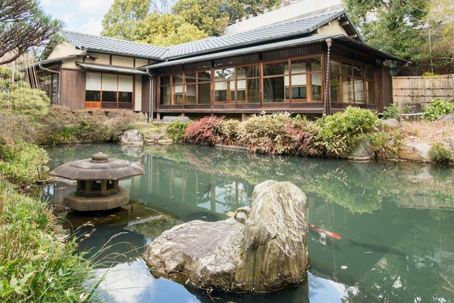 和室の前の池には鯉が泳いでいます。