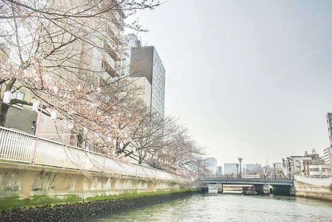 1980年代に地域活性のため、土木職員たちの働きかけで桜が植えられました。
