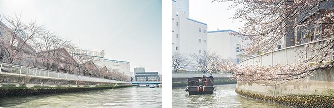 江戸川さくら祭りに合わせた、花見和船が大人気。