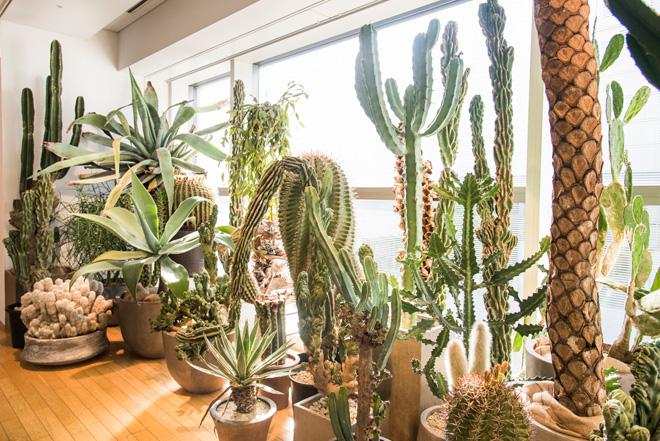 窓から外光が入る「Room 4」では珍しい多肉植物が並び、庭をイメージさせるスペースとなっている。