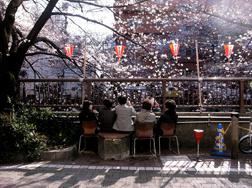 東京都目黒区中目黒_目黒川_椅子を持ち寄って花見