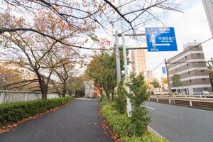 神田川沿いの紅葉を見ながらさんぽ。