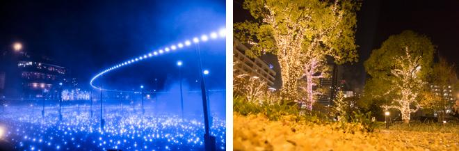 約600坪の芝生広場が青い海のような光で包まれています(左)。樹齢60年のクスノキ、通称「奇跡の木」もLEDで華やかにライトアップ。