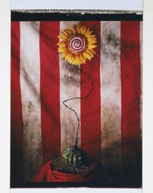 無題(不自然誌:ひまわり) 1994年  82.6 x 56.2 cm ポラロイド