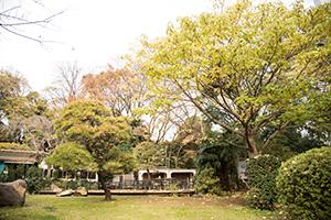 日仏学院(アンスティチュ・フランセ東京)の庭は、都心にありながら緑に囲まれていました。