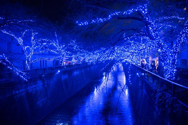 目黒川沿い全長500mが、幻想的な〝洞窟〟となり碧く輝いています。